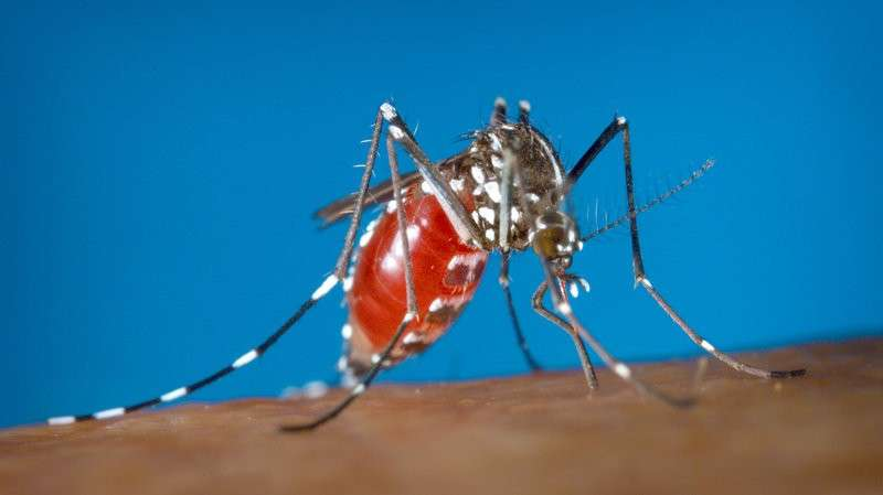 asian tiger mosquito danger