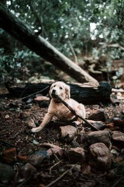 Baxter-pup